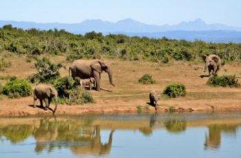 Foto von Elefanten